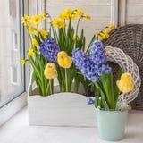 Narcisi e giacinti gialli in scatole blu del balcone per i fiori Fotografia Stock Libera da Diritti