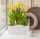 Narcisi gialli in scatole del balcone per i fiori Immagine Stock