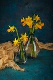 Narcisi miniatura gialli Fotografie Stock