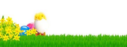 Narcisi, prato di Pasqua Immagini Stock Libere da Diritti