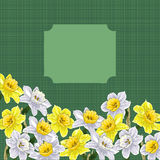 Narciso Imagem de Stock Royalty Free