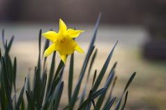 Narciso. Imagen de archivo libre de regalías