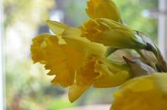 Narciso Foto de archivo