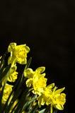 Narciso Fotos de archivo
