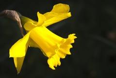 Narciso Imagenes de archivo