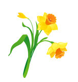 Narciso amarelo dos desenhos animados Foto de Stock