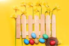 Narciso amarelo, flor da mola atrás da cerca de madeira com ovos da páscoa Fotos de Stock Royalty Free