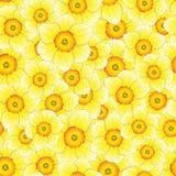 Narciso amarelo amarelo - Narcissus Seamless Background Ilustração do vetor ilustração stock