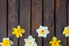 Narciso amarelo no fundo de madeira escuro Narciso amarelo e branco ano novo feliz 2007 Copie o espaço Vista superior rr Fotos de Stock
