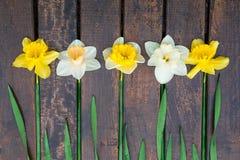 Narciso amarelo no fundo de madeira escuro Narciso amarelo e branco ano novo feliz 2007 Vista superior Fotos de Stock