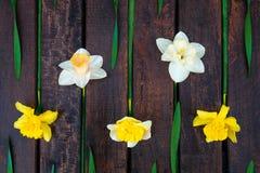 Narciso amarelo no fundo de madeira escuro Narciso amarelo e branco ano novo feliz 2007 Vista superior rr Foto de Stock