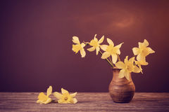 Narciso amarelo no fundo marrom Imagem de Stock