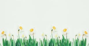 Narciso das flores no fundo branco com espaço para o texto Imagens de Stock