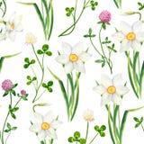 Narciso dell'acquerello e modello senza cuciture del fiore del trifoglio Illustrazione disegnata a mano di trifolium pratense e d fotografie stock