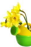 Narciso em uma lata molhando Foto de Stock