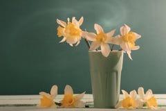 Narciso en fondo verde Fotos de archivo libres de regalías