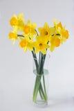 Narciso fresco da mola Fotos de Stock Royalty Free
