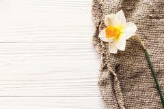 Narciso fresco hermoso en tela rústica en la tabla de madera blanca Fotos de archivo libres de regalías