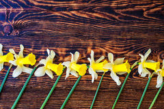 Narciso giallo su fondo, sulla molla o sul fondo di legno marrone di pasqua, marzo Fotografia Stock