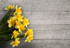 Narciso giallo su un fondo strutturato di legno Immagini Stock