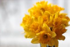 Narciso Grande-ahuecado Fotos de archivo libres de regalías