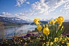 Narciso, montanha e lago Foto de Stock