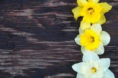 Narciso no fundo de madeira Foto de Stock