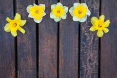 Narciso no fundo de madeira Fotografia de Stock