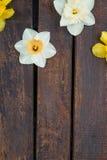 Narciso no fundo de madeira Imagens de Stock