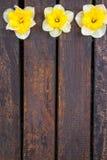 Narciso no fundo de madeira Fotos de Stock