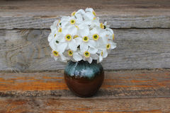 Narciso no vaso Fotos de Stock Royalty Free