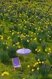 Narciso-prado imagen de archivo