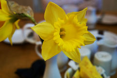 Narciso in una stanza del caffè Fotografie Stock