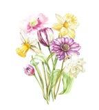 Narciso y tulipán, Gerbera de las flores de la primavera aislado en el fondo blanco Ejemplo dibujado mano de la acuarela ilustración del vector