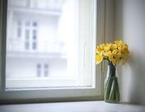 Narcisos Imagen de archivo libre de regalías