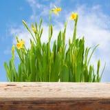 Narcisos amarelos de madeira de easter da tabela do borrão do jardim do fundo imagem de stock royalty free