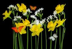 Narcisos amarelos e borboletas Fotografia de Stock
