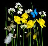 Narcisos amarelos e borboletas Imagens de Stock Royalty Free