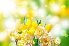 Narcisos amarelos, tulipas, bokeh foto de stock