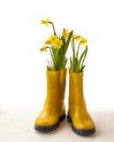 Narcisos amarillos en botas de goma amarillas Imagen de archivo
