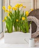 Narcisos amarillos en las cajas del balcón para las flores Foto de archivo