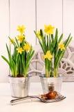 Narcisos amarillos en potes Imagen de archivo libre de regalías