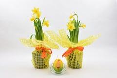 Narcisos amarillos y Pascua huevo-como vela imagen de archivo libre de regalías