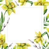 Narcisos e hierba verde y gatito-sauce en fondo de la flor blanca Fotografía de archivo libre de regalías