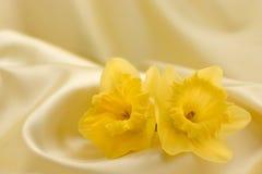 Narcisos en el satén amarillo Imagenes de archivo