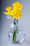 Narcisos en florero Fotografía de archivo