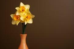 Narcisos en florero de madera Fotos de archivo