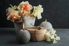 Narcisos en maceta en fondo concreto oscuro Fotos de archivo