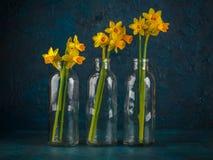 Narcisos miniatura amarillos Foto de archivo libre de regalías