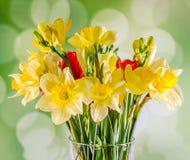 Narcisos y flores amarillos de las fresias, tulipanes rojos en un florero transparente, cierre para arriba, fondo blanco, aislado Fotografía de archivo